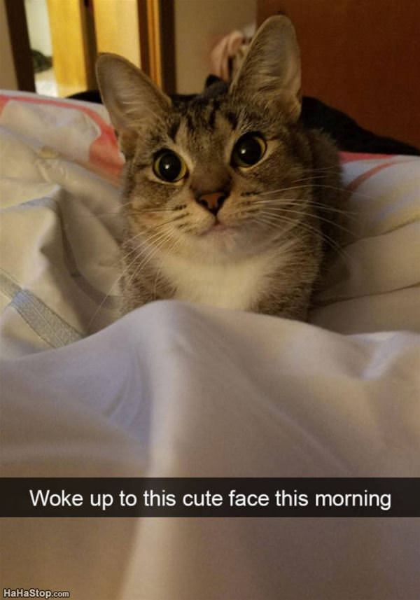 Woke Up To This Cute Face
